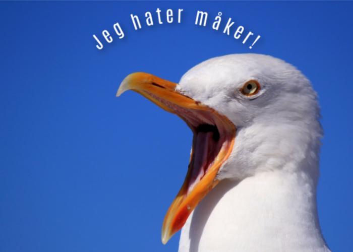 Måker, jeg hater måker!